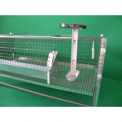 Drinker and feeder on Cage for laying quail