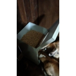 Dog Hopper Feeder